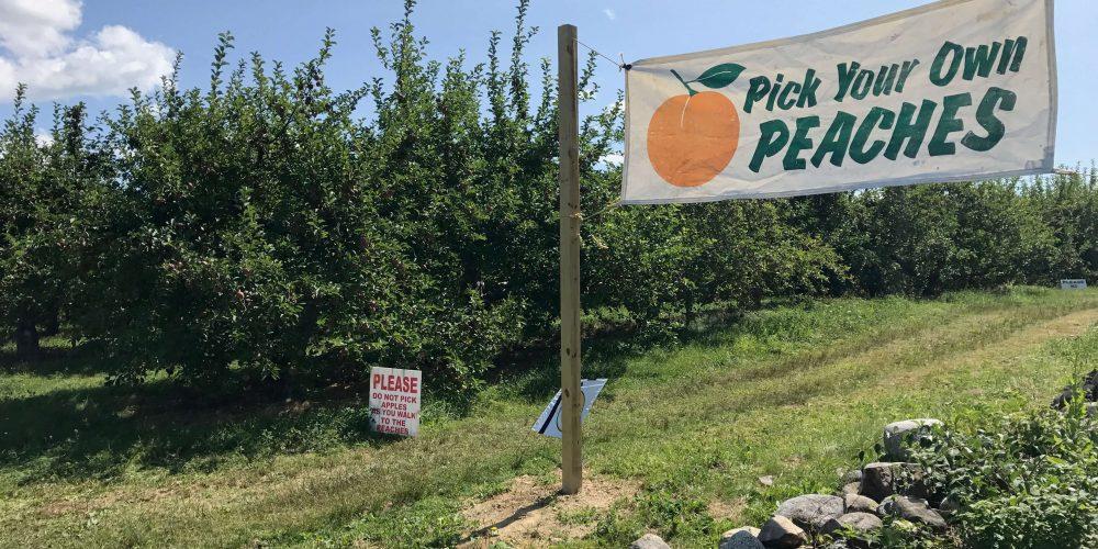Applecrest in NH